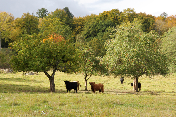 Ängsmark Tomarp